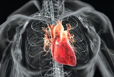 Как влияет алкоголь на сердце и сосуды
