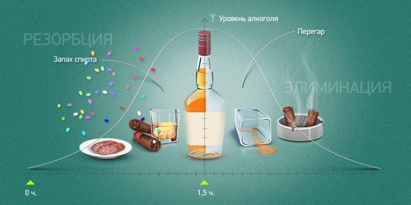 Усвоение и выведение алкоголя организмом
