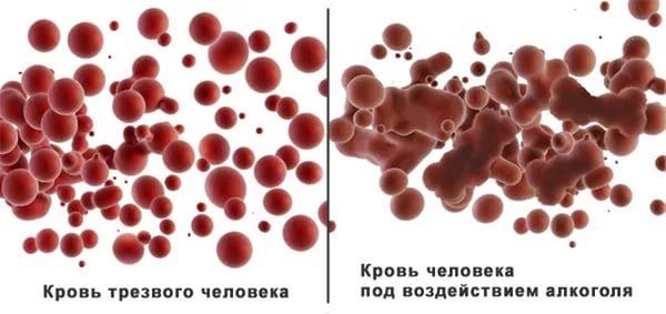 Влияние алкоголя на реологические свойства крови, гемоглобин и холестерин